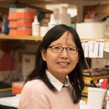 Sui Wang, PhD